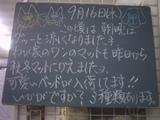 090916南行徳