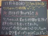 081104南行徳