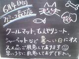 2011/06/04森下
