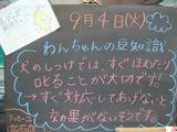2012/9/4立石