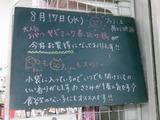2011/8/17南行徳
