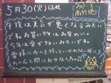 060530南行徳