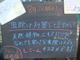 2012/8/22立石