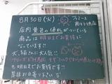 2011/8/30南行徳
