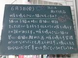 2011/6/3南行徳