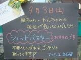 2011/09/03立石