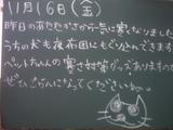 071116南行徳