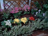061119南葛西花壇