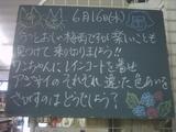 2010/6/16南行徳