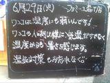 2010/06/29森下