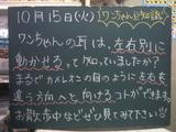 081014南行徳