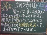 060529南行徳