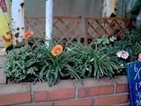 060615花壇