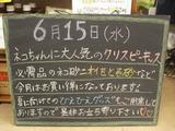 2011/6/15松江