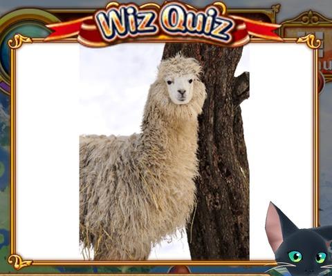E-quiz22s