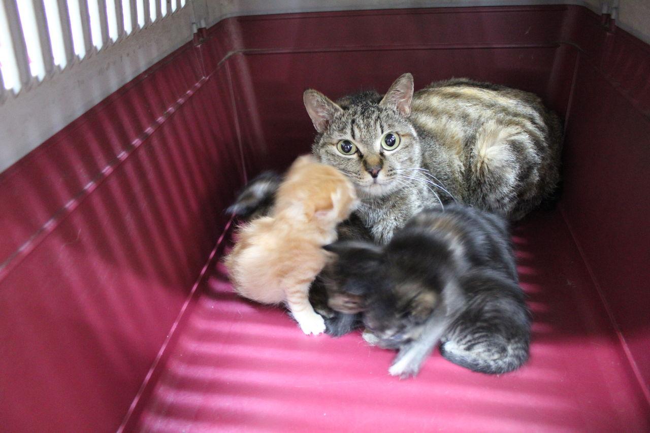 おかしい 猫 保護 団体