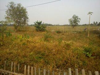 開墾前の空き地