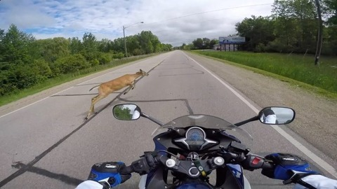 motorcycle-vs-deer-758x426