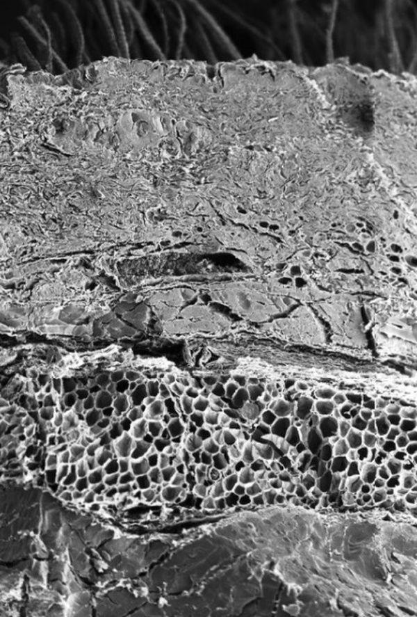microskop_05