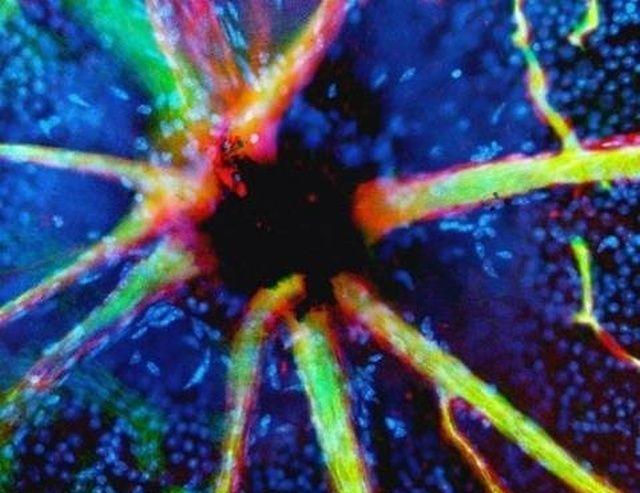 microskop_06