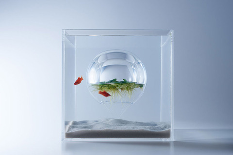 Waterscape-Fish-Tanks-FreshersMag-01