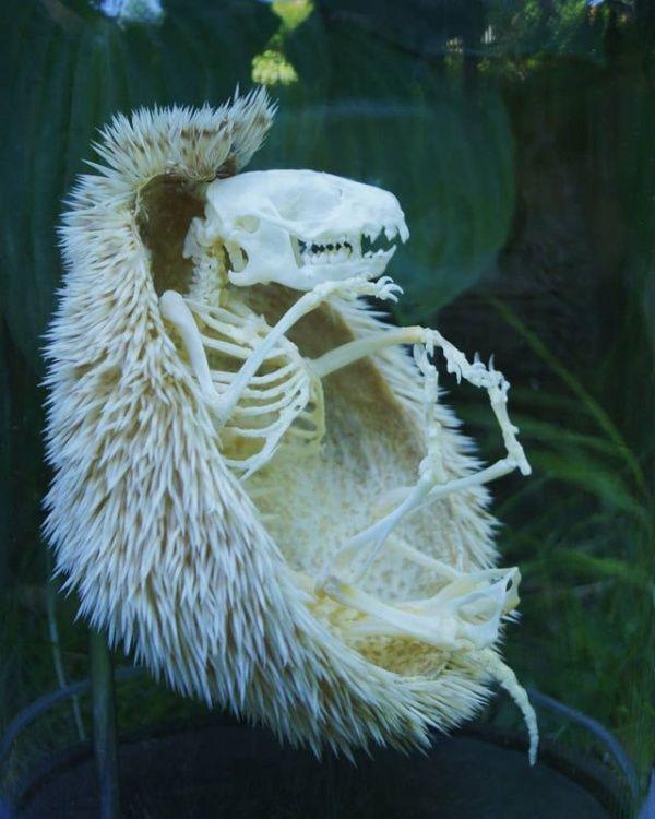 skeleton_04