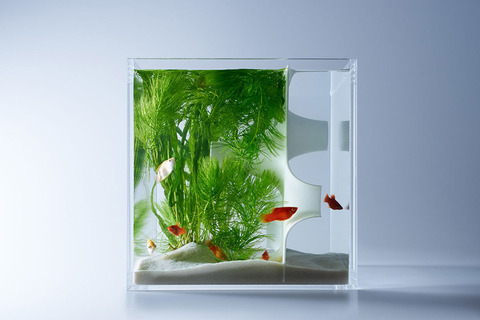 Waterscape-Fish-Tanks-FreshersMag-08