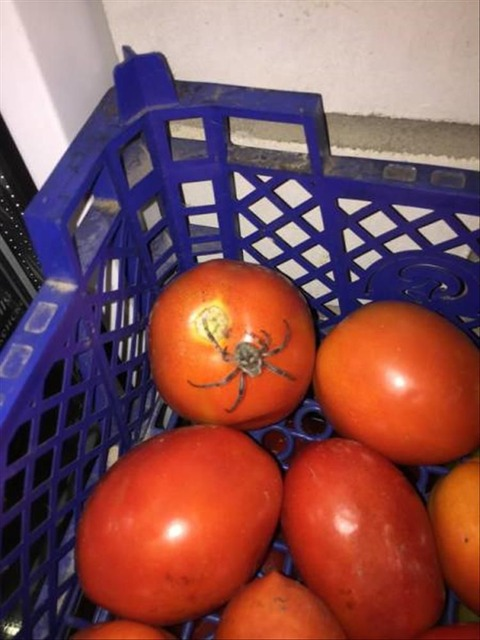 最初は、私はそれがトマトの茎の一部だと思いました