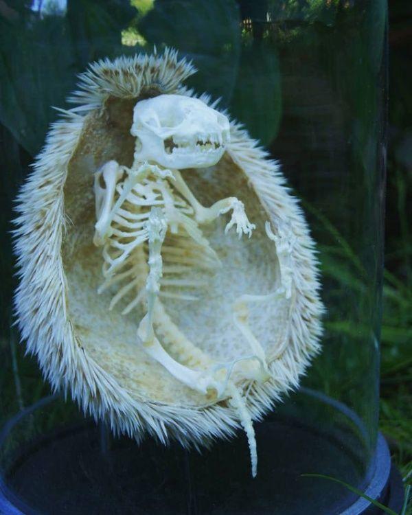 skeleton_03