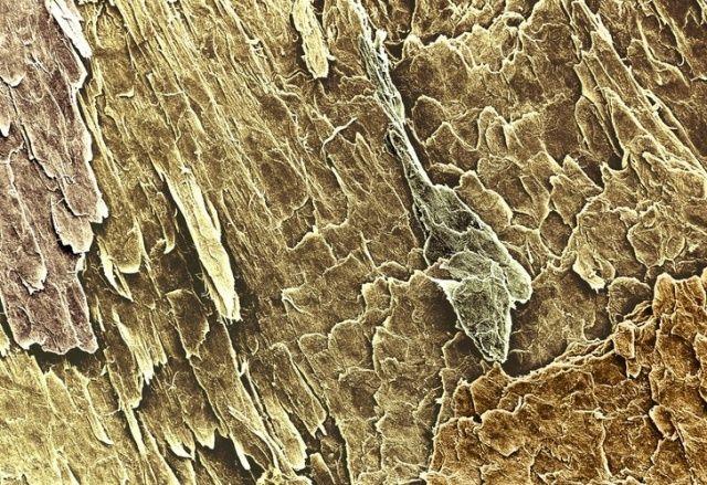 microskop_16