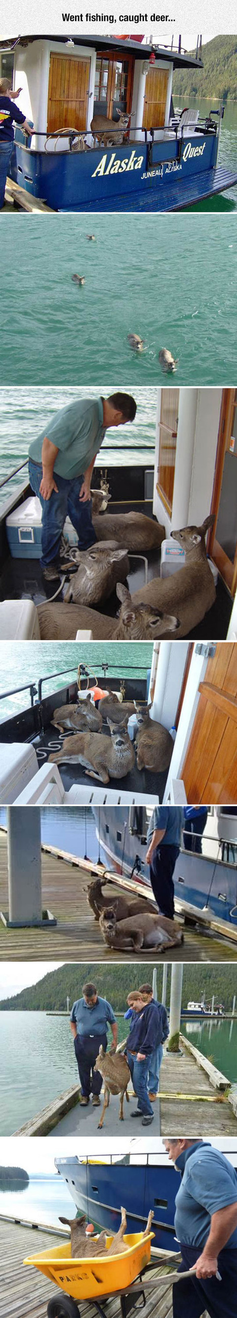 Deer-Fishing-Done-Properly