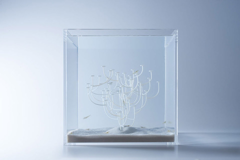 Waterscape-Fish-Tanks-FreshersMag-12