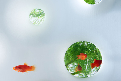 Waterscape-Fish-Tanks-FreshersMag-09