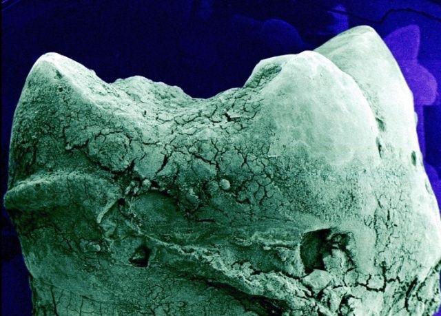 microskop_13