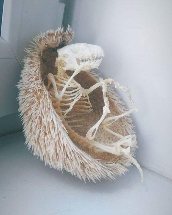 skeleton_01