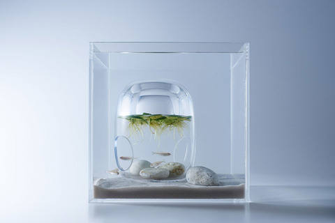Waterscape-Fish-Tanks-FreshersMag-03