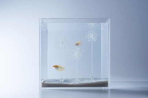 Waterscape-Fish-Tanks-FreshersMag-10