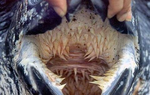 letherback_turtle_03