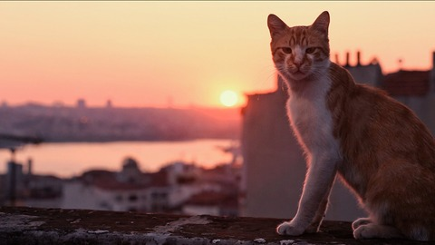 猫が教えてくれたこと5