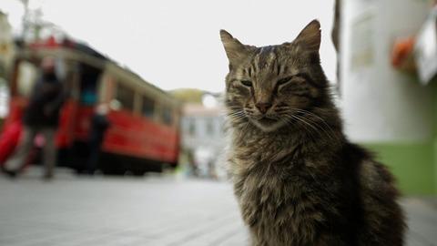 猫が教えてくれたこと4