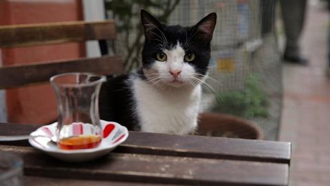 ドキュメンタリー映画「猫が教えてくれたこと」
