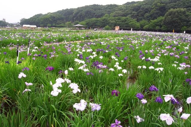 【GX200】北山公園の風景