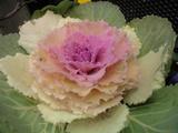 【920SC】花を撮影っす