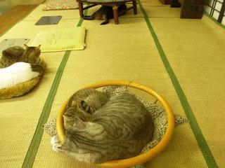 和室で寝る猫ちゃん