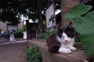 【GX200】川越の猫たち…その2