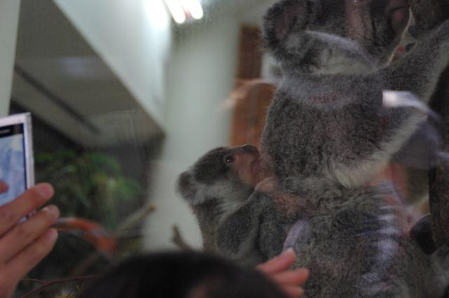 東松山こども動物自然公園の赤ちゃん特集