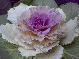 【705NK】花でも撮影っす