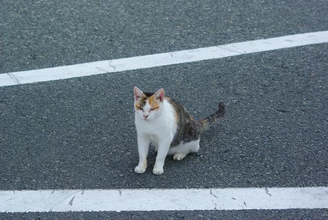 【K200D】城ヶ島の猫たち … その2