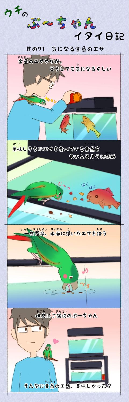 ぷ~ちゃん日記_71話_気になる金魚のエサ