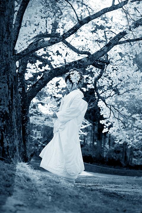 満開の桜の下で 大好きな彼女とお花見!